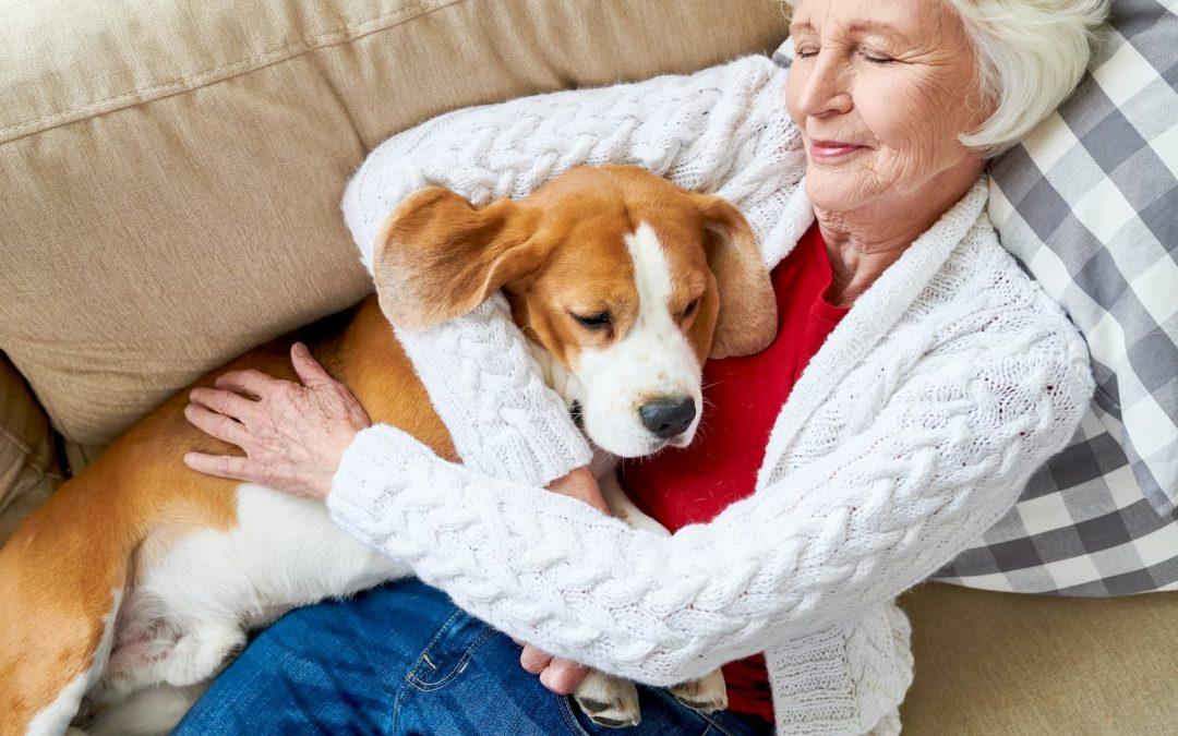 Seniors : comment économiser sur les frais de santé de son animal de compagnie ?
