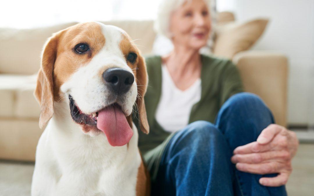 Comment choisir un animal de compagnie quand on est senior ?