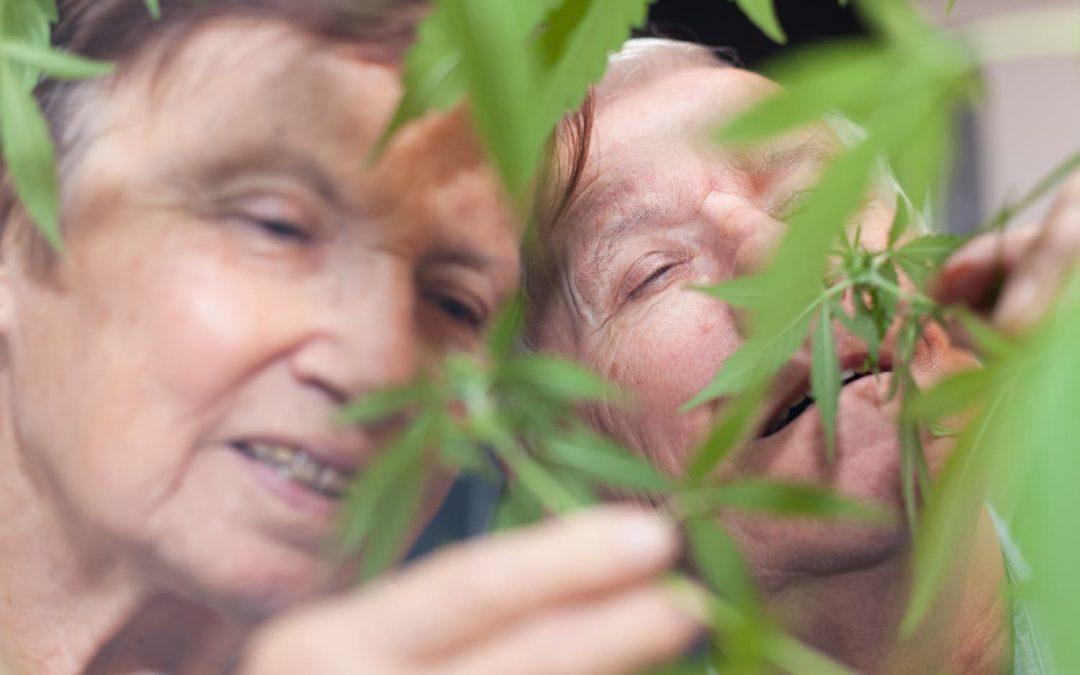 Les atouts du CBD : comment s'en servir pour bien vieillir?